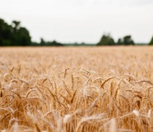 landscape-field-sonja-langford-sonja
