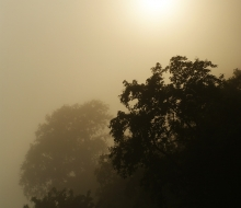 misty-moon-brown