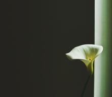 lone-flower-green